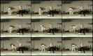 OPEN DE CAEN Caen Tae Kwon Do Academie MAI 2012